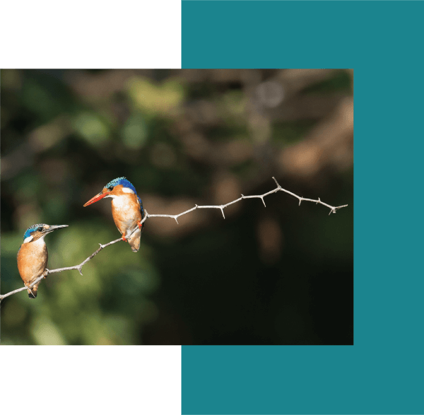 bird watching resorts around hyderabad